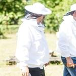 Nézegessen szúnyoghálófejű Orbán Viktort