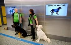 Finnországban már kutyákkal szagoltatják ki a koronavírus-fertőzést