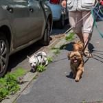 Egy tanulmány szerint tovább él, akinek kutyája van