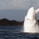 Majdnem felborította a bálna a hajót, de az utasok csak nevettek