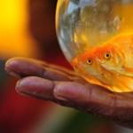 Csak a halak akváriumát tisztította ki, de közben megmérgezte a családját