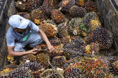 Egekbe szökhetnek az árak a pálmaolaj-válság miatt