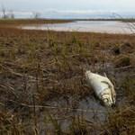 Állítólag lehalászták az olajat az egyik tönkretett norilszki folyóról