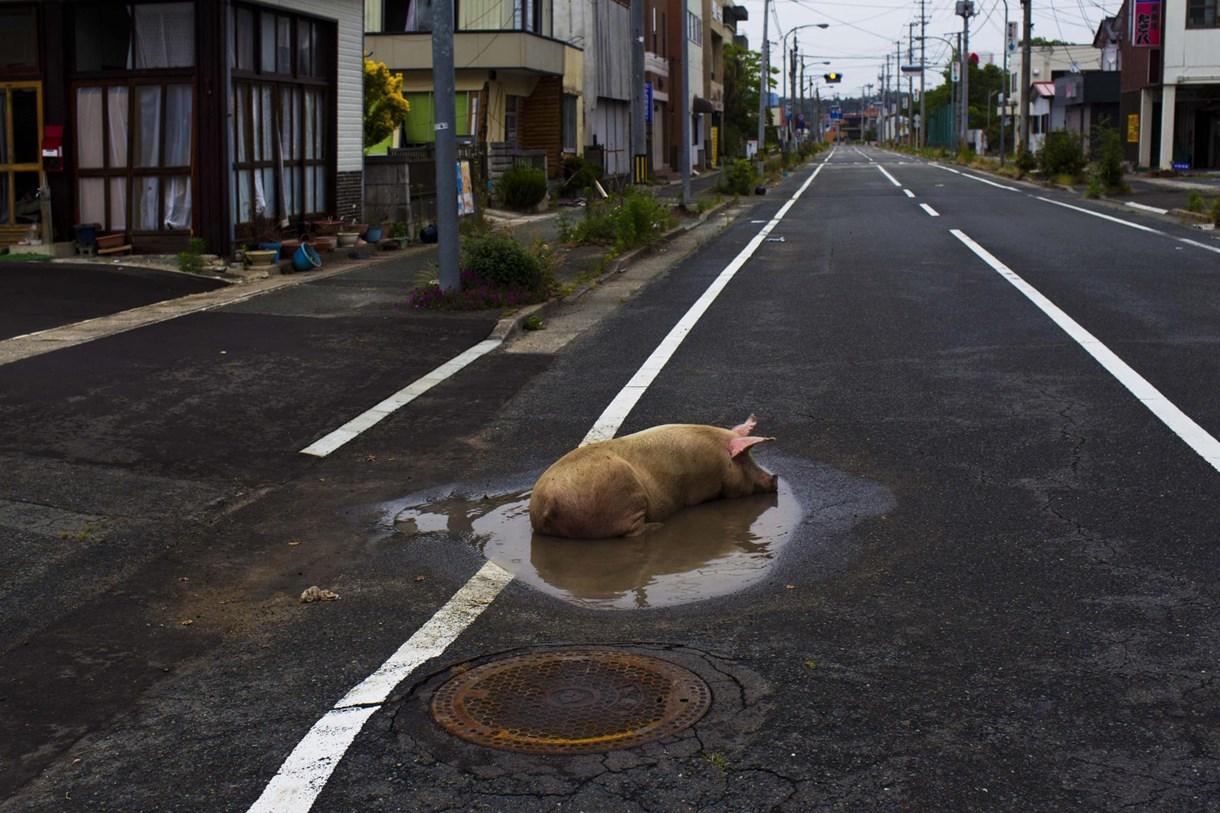 Szellemvárosok Fukusima körül: fél év képekben - Nagyítás-fotógaléria