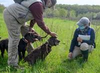 Kutyák segítenek felkutatni egy veszélyeztetett teknősfaj egyedeit –videó