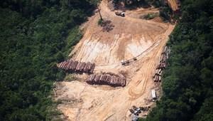 A koronavírus elleni küzdelem árnyékában felgyorsult a trópusi erdők irtása
