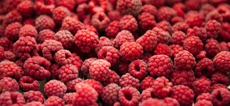Izgalmas biológia teszt: mindent tudtok az egészséges táplálkozásról?