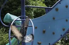 Emmi: A miskolci gyermekváros nem megszűnik, hanem megújul