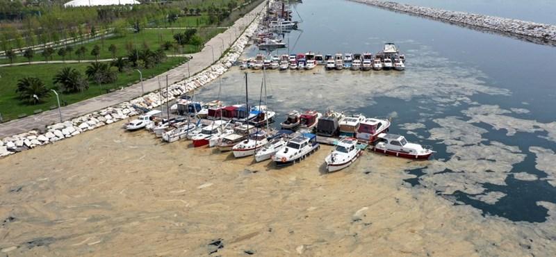 Horrorisztikus tengeri nyálkával küzdenek a török partoknál