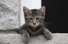 Végignézte az internetre feltöltött macskás képeket a mesterséges intelligencia, már sajátokat is készít