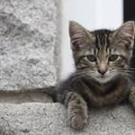 Macskagyógyszer védhet a koronavírustól