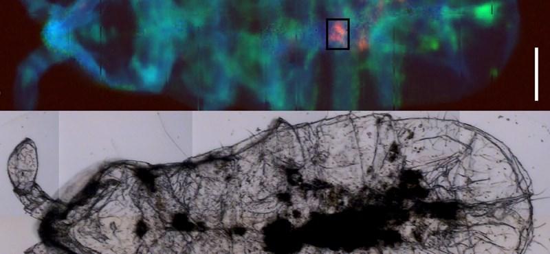 Mérföldkő, de a szomorú fajtából: műanyagszemcséket találtak már a Déli-sarkvidék szárazföldjén is