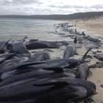 Ez aggasztó: szokatlanul sok delfin tetemét mossa partra a víz Görögországban