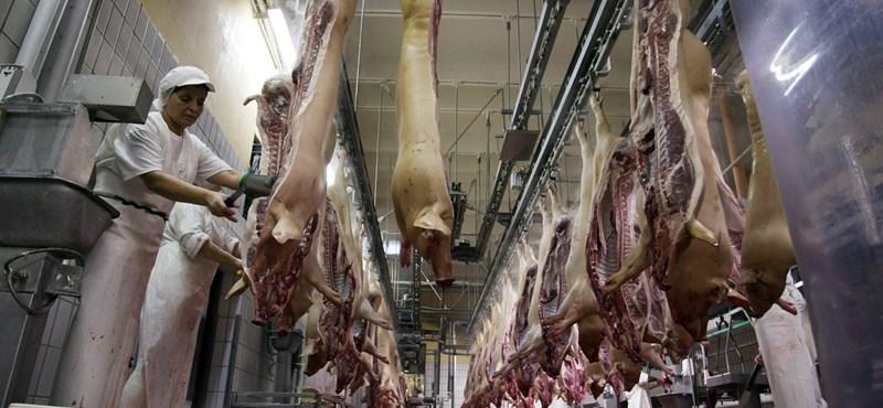 Nyers disznóhúsért 2 év börtön járhat Japánban