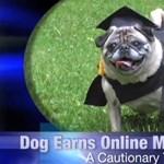 Áttörő felfedezés a kutyákkal kapcsolatban Oxfordban