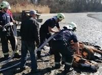 Lovat kellett kimenteni a tatai Öreg-tó iszapjából