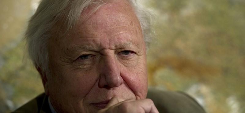 Sir David Attenborough elárulta, melyik a kedvenc élőlénye
