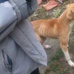 Éhező, szomjazó, bezárt kutyákat és macskát találtak a rendőrök