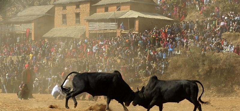 Egy operaelőadás miatt háborognak a spanyol állatvédők