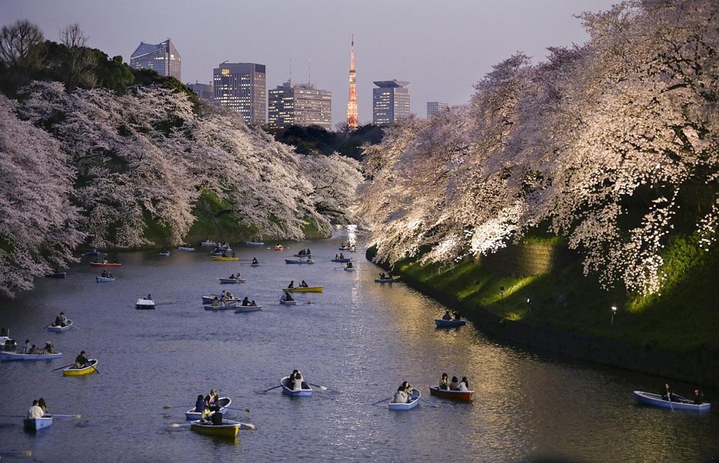 epa.15.03.30. - Tokió, Japán: Csónakázók virágba borult cseresznyefaágak alatt a tokiói Csidorigafucsi Parkban - évképei, cseresznyefa