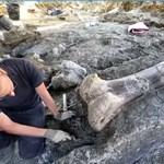 Az egyik legnagyobb dinó combcsontját találták meg Franciországban - videó