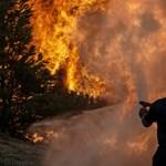 Menekültek önkénteskednek a Görögországban pusztító erdőtüzek megfékezésénél