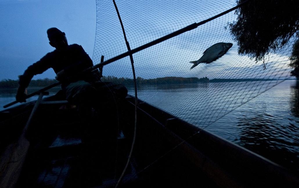 Hagyományos halászat a Dunán, Fajsz, 2013. október 25. Varga Károly halász ladikkból millingezik Fajsz mellett a Dunán 2013. október 24-én. A hagyományos halászat a Duna magyarországi alsó szakaszán 2013-ban felkerült az UNESCO szellemi kulturális örökség