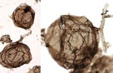 Találtak egy 1 000 000 000 éves gombát