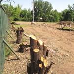 Kivágtak egy halom fát a Margitszigeten a teniszstadion bontása miatt