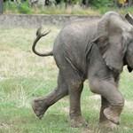 Újsághirdetésben árulja vadon élő állatait egy afrikai ország