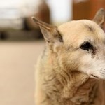 Elpusztult az ország legöregebb kutyája