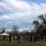 Fotó: magyar fa lett a második az év európai fája versenyen