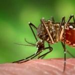 Szúnyoginvázió: mire számíthatunk a nyáron?