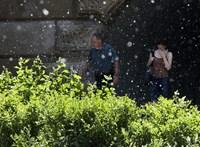 Országszerte kritikus a pollenhelyzet