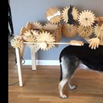 Megépítették minden kutyatartó kötelező kellékét: itt a kutyasimogató gép – videó