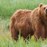 Az életéért küzd a vadász, akire ráesett egy medve