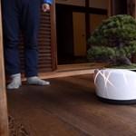 A TDK kitalálta, hogyan lehet nagyon könnyen életben tartani az otthoni bonsai fát