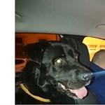 Vonattal, Győrig menekült a petárdák elől egy kutya