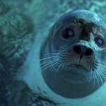 Minden partra vetődött állatban találtak műanyagot Nagy-Britanniában