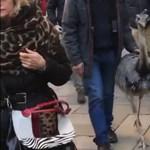 Bökte a csőrét a velenceieknek az emukat sétáltató páros – videó