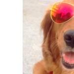 A kutyatulajdonosok több képet készítenek kedvenceikről, mint partnerükről