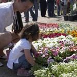 Több százezer virág borítja be a fővárost