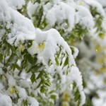 Egy hetet töltött a hó miatt a világtól elzárva egy szilvásváradi erdész