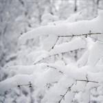 Nézegessen gyönyörű havas képeket a Mecsekről