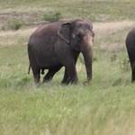 Elefántokat mészároltak le bosszúból a bennszülöttek