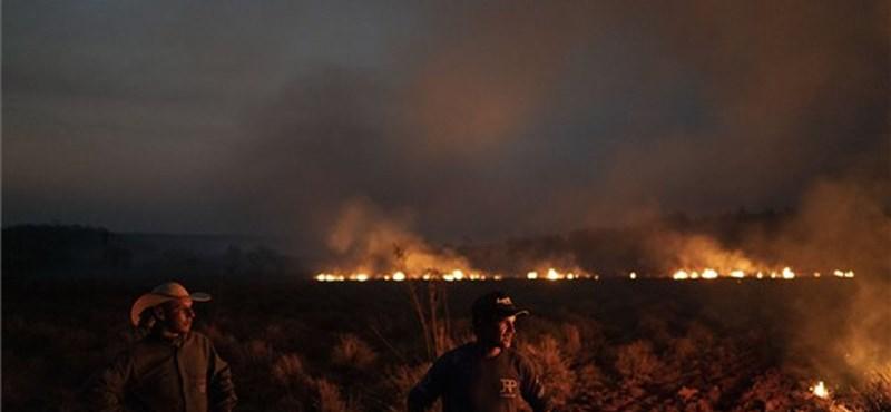 Magyar tűzoltók is mennének oltani az amazóniai erdőtüzet