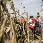 Nyerészkedik a szlovén állam a menedékkérők elszállásolásán