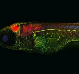 Káprázatos mikroszkópikus fotók - Nagyítás