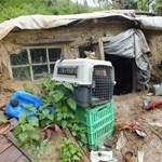 Napokig bujkált Kaposvár mellett egy brutálisan összevert nő