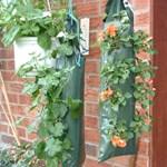 Kaspó helyett - zsákos növények a kertben